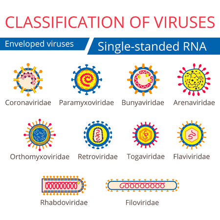 Classification of viruses. Enveloped viruses. Stock Illustratie