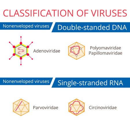 Classification of viruses. Nonenveloped viruses. Vector biology icons, medical virus icons.