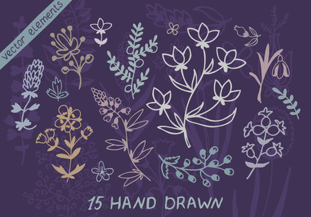 tarragon: Plants and flowers set. Vector design elements. Illustration for your cute design.