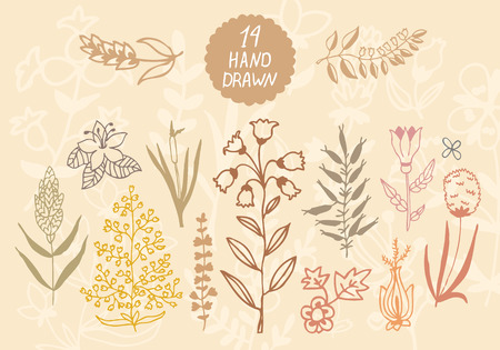 herb garden: Plants and flowers set. Vector design elements. Illustration for your cute design.