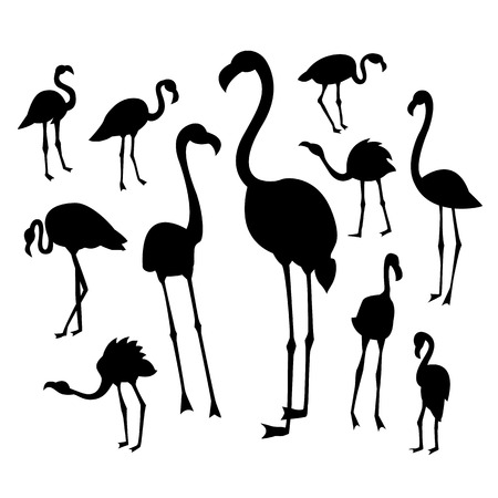 wader: Black flamingo silhouettes on white background in different postures. Vector illustration for your cute design.