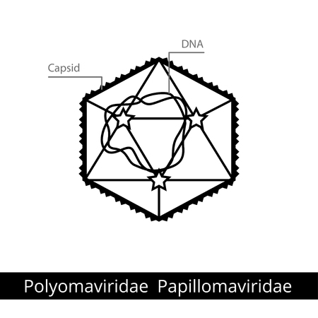 Polyomaviridae Papillomaviridae. Classification of viruses. Vector biology icons, medical virus icons.