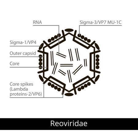enveloped: Reoviridae. Classification of viruses. Vector biology icons, medical virus icons.