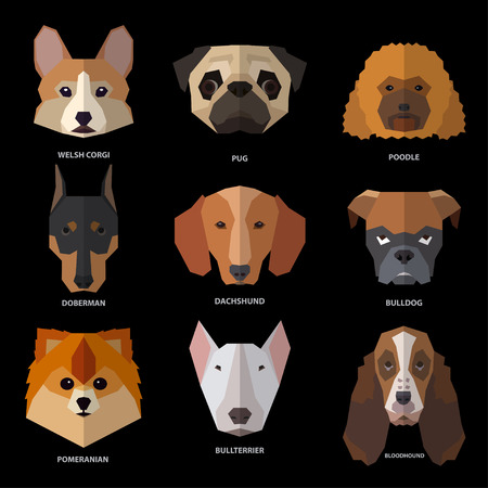 Dog heads of different breeds