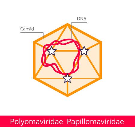 Polyomaviridae Papillomaviridae. Classification of viruses. Vector biology icons, medical virus icons.