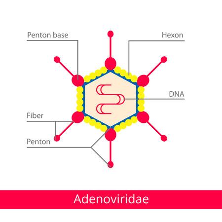 Adenoviridae. Classification of viruses. Vector biology icons, medical virus icons.