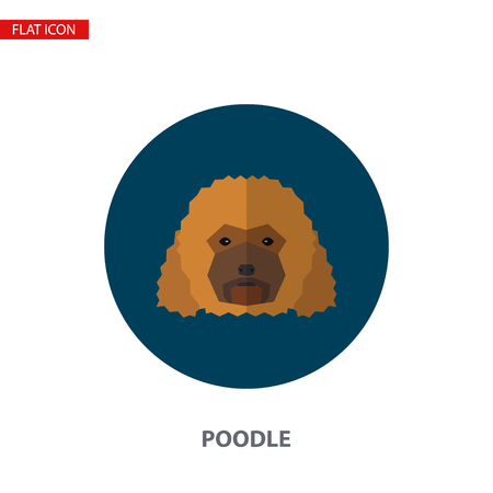 Poodle head vector flat icon on turquoise circular background. It can be used as - logo, pictogram, icon, infographic element.