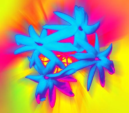 swoop: Blue flowers of Jasmine. Impressionism Stock Photo