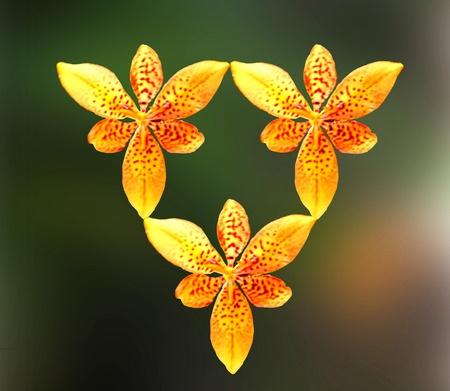 Lily de BlackBerry. Colores naturales. Abstracción de geometría.