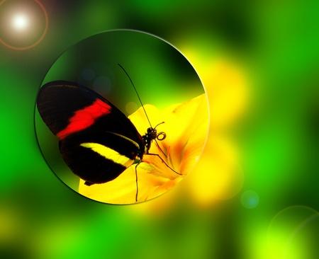 melponeme, las alas cerradas. Mariposa, sobre el detalle de fondo. Los colores naturales