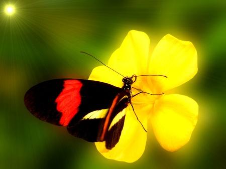 Heliconius melponeme, abrió las alas. Mariposa en la flor amarilla. Los colores naturales