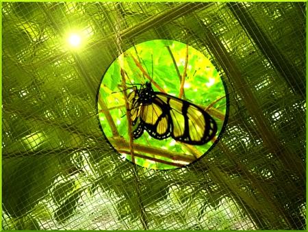 Los colores naturales de la mariposa de escalada Foto de archivo
