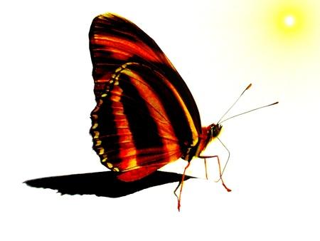 Mariposa buscando a los colores naturales de Sun