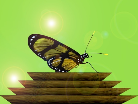 Mariposa sobre la madera