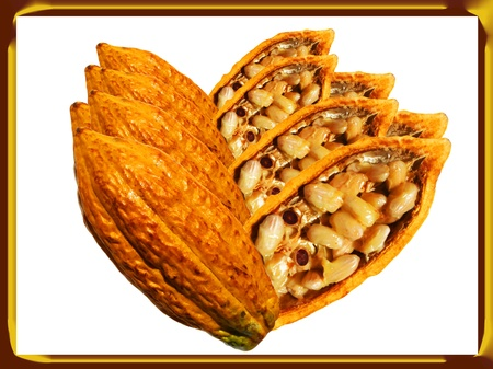 The gods food  Cocoa fruit  Composition with frame  photo
