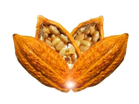 Cocoa Composición de frutas