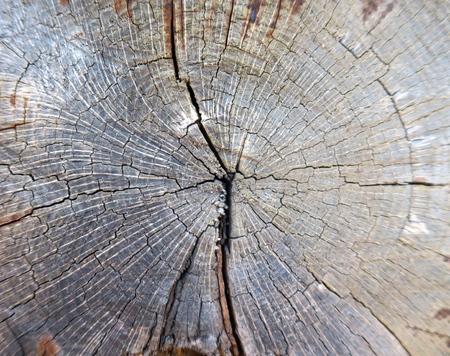 Dwarsdoorsnede van gebarsten oude boomboomstam die de groeiringen toont