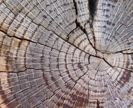 Dwarsdoorsnede van oude boom stam tonen groeiringen Stockfoto