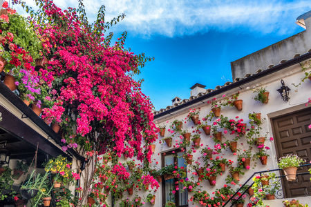 Geraniums and bougainvillea in one of the patio-participants at the traditional patio festival (Patios de Cordoba) in Cordoba, Andalusia, Spain Stok Fotoğraf
