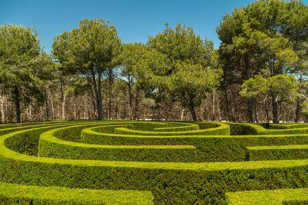 Shrub green labyrinth in Tentegorra, Spain 스톡 콘텐츠 - 131757369
