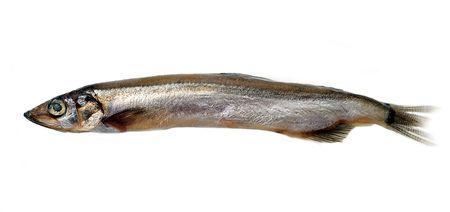 fish (sprat)