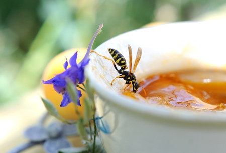 Hungry wasps eating apricot jam. Stock Photo