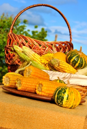 Autumn composition: cooked and fresh corn and pumpkins in the garden; blue sky as a background.  photo