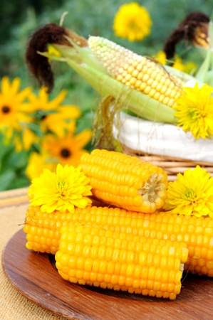 Cooked and raw corncobs with yellow flowers on the background. photo