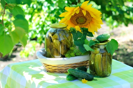 Still life with fresh and pickled cucumbers in the garden  photo