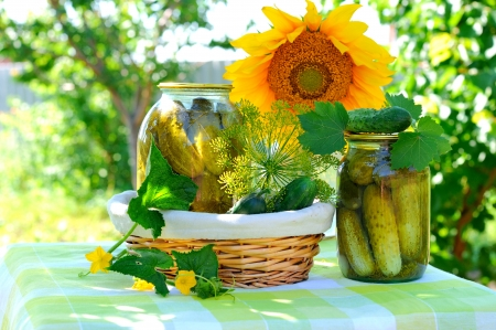 Still life with fresh and pickled cucumbers in the garden. photo