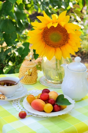 Still life with fruits and tea in the garden photo