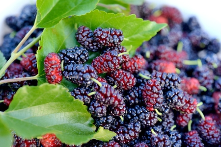 Close-up of fresh mulberry in bucket