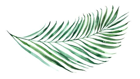 Tropical watercolor illustration of a palm leaf. Natural green fabric or packaging design.
