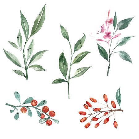 Set of watercolor illustrations. Green leaves, berries, barberry, branch of fireweed, sea buckthorn.