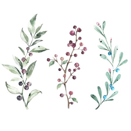 Set of watercolor illustrations. Branches of green leaves with black and blue berries. Imagens
