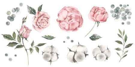 Set of watercolor illustrations of peonies, roses and cotton buds. Color pastel peach.