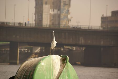 in the city on the river a white Heron stands on a green buoy against the blurred background of a bridge and a high rise building close up