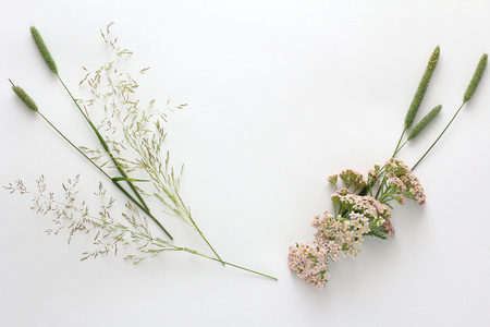 Flat lay. Composition of wildflowers Stock Photo