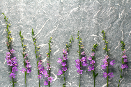 campanula flowers on a structured background. flat lay creative layout Stock Photo