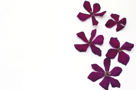 flores fucsia: Beautiful purple clematis flowers. Frame to the right. Flat lay, top view Foto de archivo
