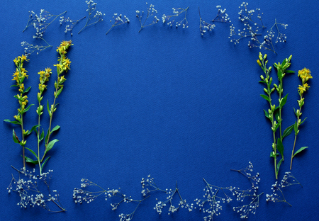 frame of fresh yellow flowers on a dark blue background. simple top view composition, space for a text