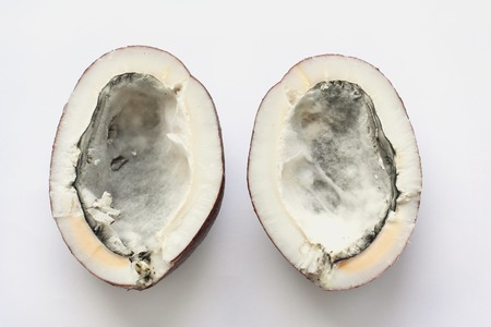 two halves of coconut spoiled by mold. view from the top on a white background.