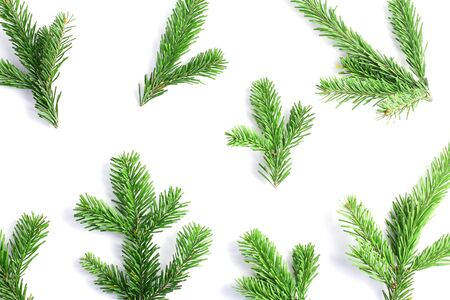 pattern of green fresh spruce branches on a white background. holiday concept, top view 写真素材