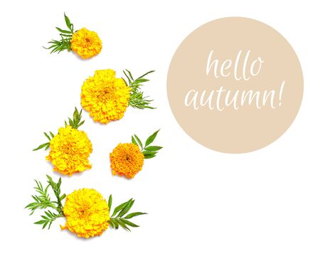hello autumn. fresh flowers on white background. flat lay composition. Standard-Bild - 129486522