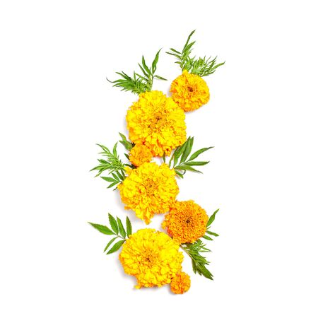 fall composition. orange flowers on white background. flat lay, square frame. Standard-Bild - 129486605