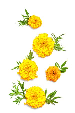 fall concept. composition made yellow fresh flowers on white background. flat lay, vertical frame