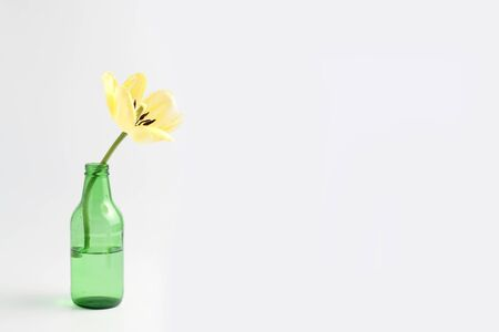 minimalistic flower composition. yellow tulip in a vase on a white background, space for a text.