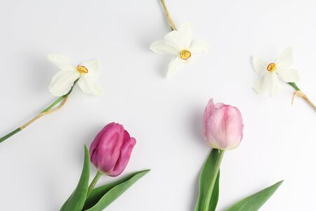 beautiful frame of spring flowers on a white background. tulips and daffodils. flat layout, space for text.