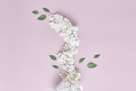 floral concept. fresh white hydrangea flowers. flat lay, top view