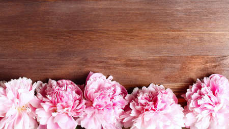 peony flowers frame on wooden background. space for a text, view from above. panoramic floral banner. Foto de archivo